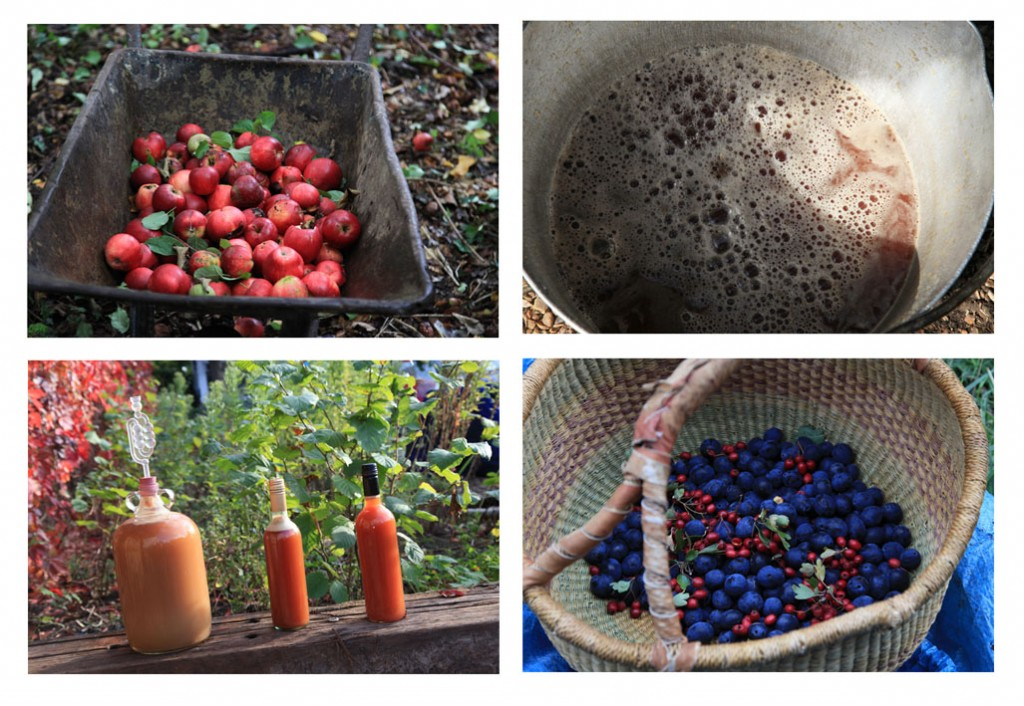 Apples, damsons and pressing